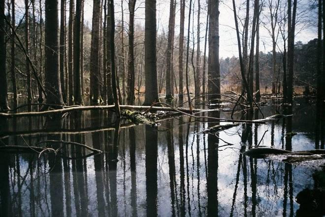 Beaver territory