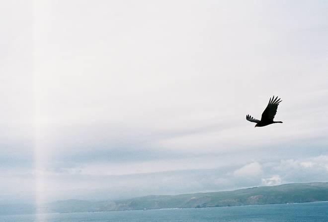 Vulture surprise