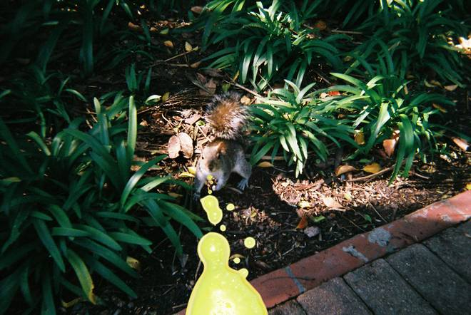When your squirrel photo comes back like this and you know that digital will never be as good as analog