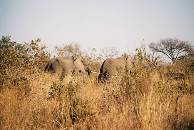 Elephants chillin'